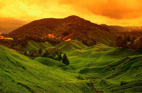 Malesia - Cameron Highlands
